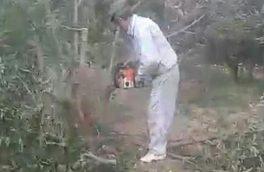 علت قطع ۵۰ اصله نهال درخت سیب توسط باغدار دماوندی/ اصلاح باغها و جایگزین نهالهای تجاری در دستور کار قرار دارد