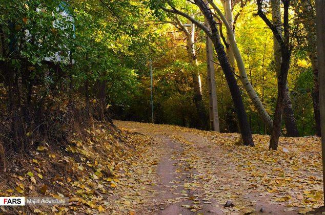 پاییز زیبای دماوند