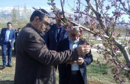 بازدید معاون وزیر جهاد کشاورزی از باغات دماوند و فیروزکوه/ ۵۴۰ میلیارد تومان خسارت به باغداران دماوند وارد شد