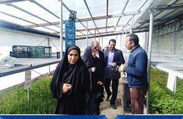 دهیاریها منطبق با سند توسعه حرکت کنند/ وجود ۷۰۰ روستا در استان تهران/ تصویب ۵ دهیاری در انتظار هیئت وزیران