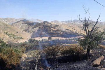 ۳۰ هکتار از باغات و اراضی روستای « زیارت» در آتش سوخت