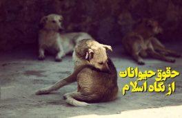 حقوق حیوانات از نگاه اسلام/ کشتار سگها برخوردی اسلامی یا ایرانی است؟!