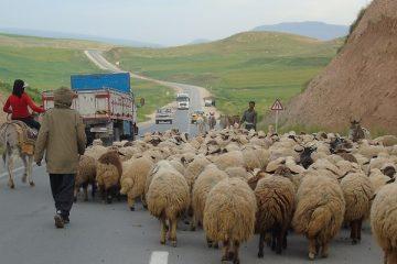 کوچ بهاره عشایر در دماوند و فیروزکوه آغاز شد