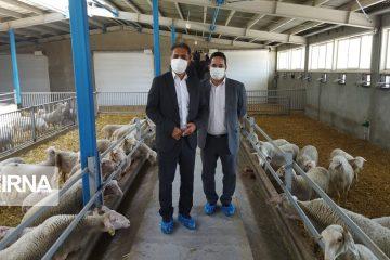 بازدید معاون وزیر جهادکشاورزی از دامداریهای دماوند و فیروزکوه